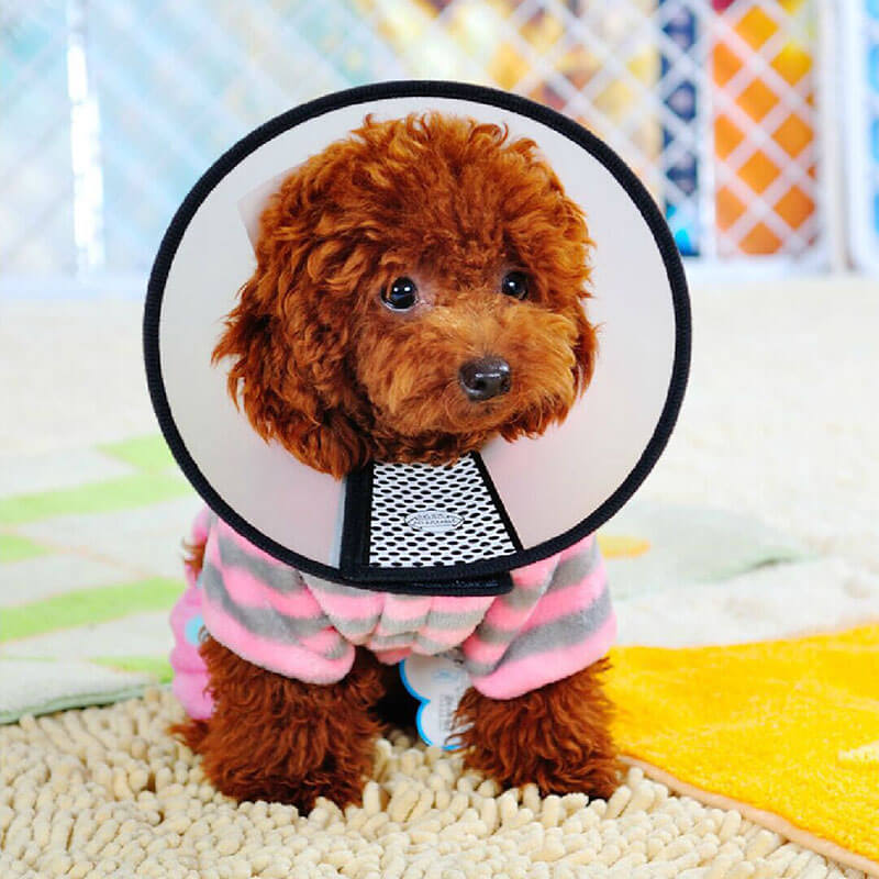 Elizabethan collar Pet cone E-collar For Cats and Dogs