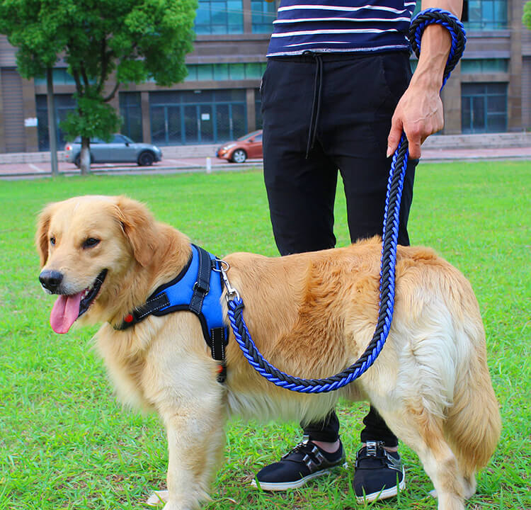 Double Strong Dog Leash and Harness Set in Uganda