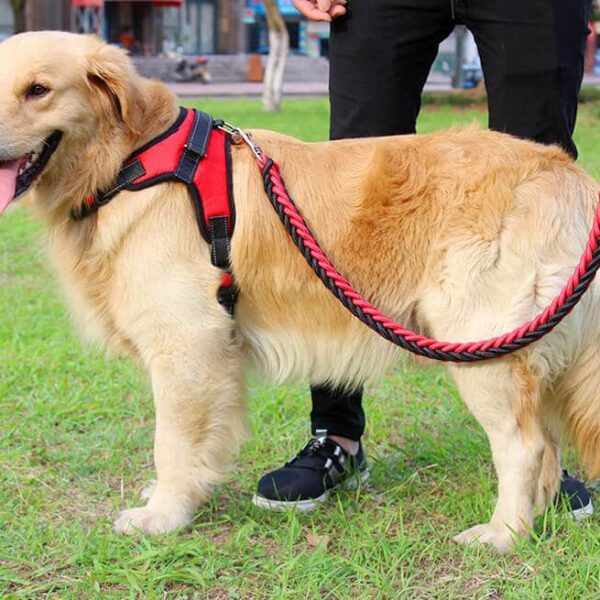 Buy Double Strong Dog Leash and Harness Set Rope in Uganda