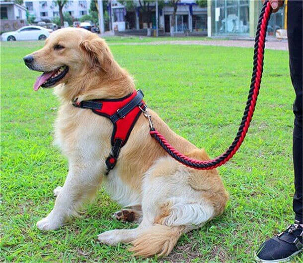 Double Strong Dog Leash and Harness Set Dog Leads in Kampala